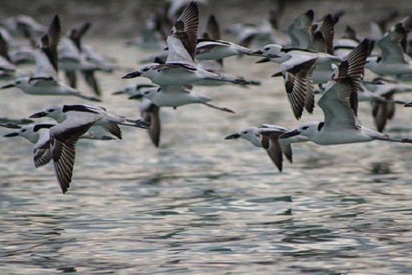 107هزار بال پرنده سرشماری شد، آذربایجان غربی بهشت پرندگان ایران