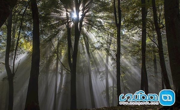 جنگلی بازمانده از عصر ژوراسیک